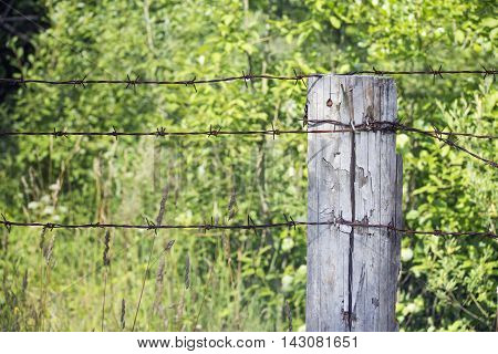Close view of wooden pole with barbed wire