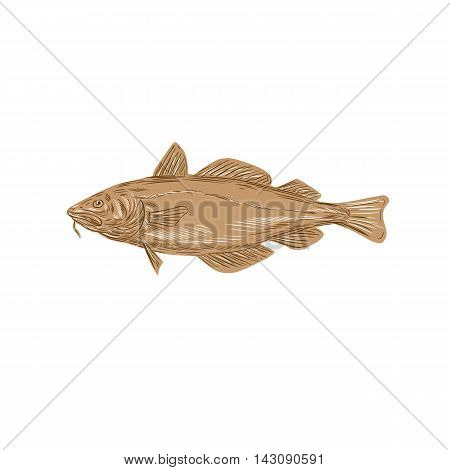 Drawing sketch style illustration of an Atlantic cod or Gadus morhua a benthopelagic fish of the family Gadidae also commercially known as cod or codling viewed from the side set on isolated white background.