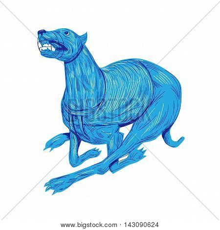 Drawing sketch style illustration of a greyhound dog with mouth guard racing viewed from the side set on isolated white background.