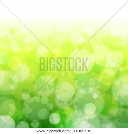 Beautiful Spring Forest Bokeh Background With Maple Leaves