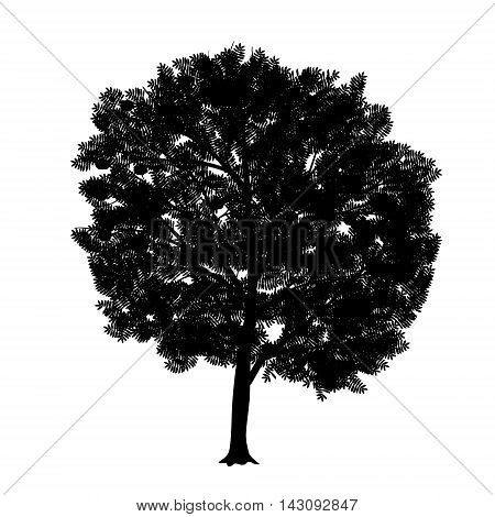 silhouette detached tree rowan with leaves on a white background
