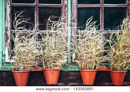 plants near window