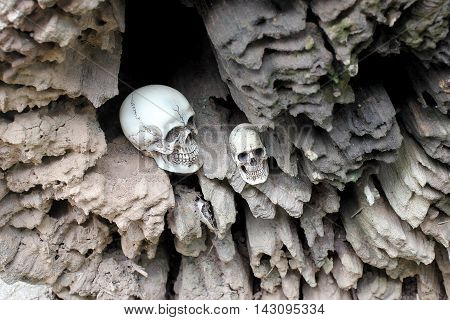 Human Skull In Hollow Of The Stub, Old Wood In The Forest. Still Life Style