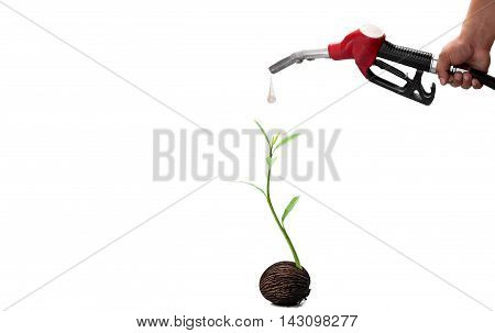 Environment concept hand holding fuel nozzle and new life plant isolated on white background