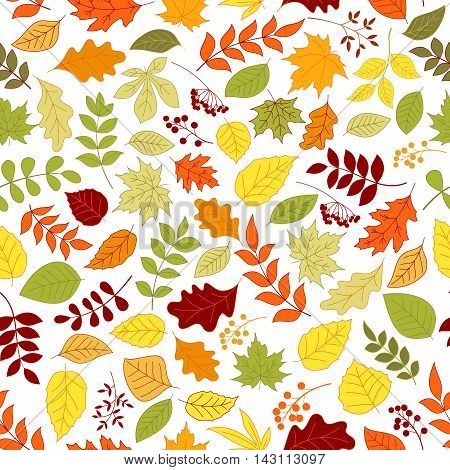 Colorful autumn leaves and berries seamless background. Wallpaper with vector pattern of trees and plants foliage oak, birch, maple, elm, poplar, aspen