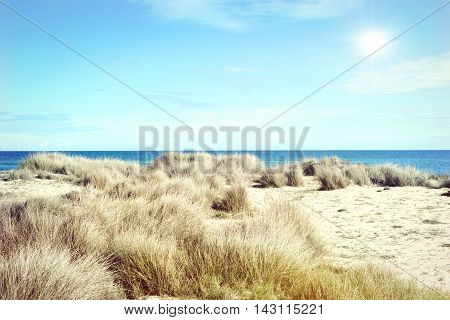Beach dunes with reeds in the sun. Beach scene with copy space.