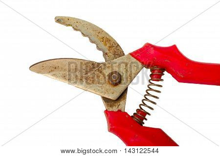 Red Garden Secateurs Isolated On A White Background