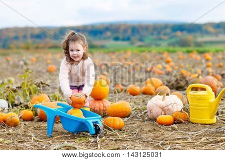 Adorable little kid girl having fun with farming on a pumpkin patch. Traditional family festival with children, thanksgiving and halloween concept. Cute farmer with big vegetables.