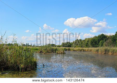 Beautiful calm lake on sunny day. Summer landscape