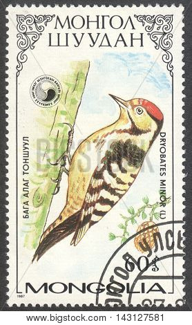 MOSCOW RUSSIA - CIRCA MAY 2016: a post stamp printed in MONGOLIA shows a Dryobates minor bird the series