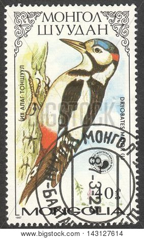 MOSCOW RUSSIA - CIRCA MAY 2016: a post stamp printed in MONGOLIA shows a Dryobates major bird the series