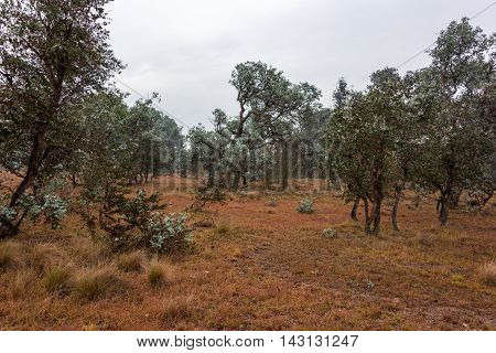 Australian bush landscape. Rural outback nature scene with native eucalyptus trees and plants