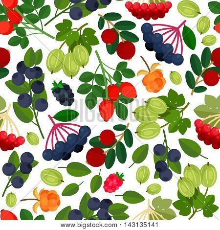 Seamless pattern with branches of cranberries, cloudberries, gooseberry, rowanberry, and elderberry twigs on white background