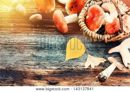 Autumn frame with forest mushrooms on old wooden background with copyspace
