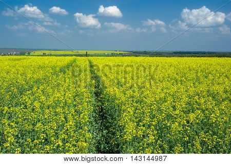 Spring landscape with flowering rape-seed field near Dnepropetrovsk city in central Ukraine.