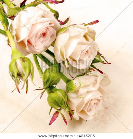 Rose with Buds Card