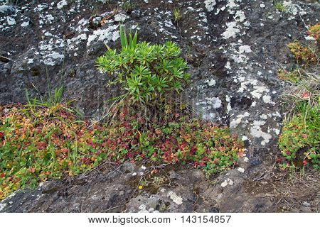 clover and lichens on rocks in the mountains