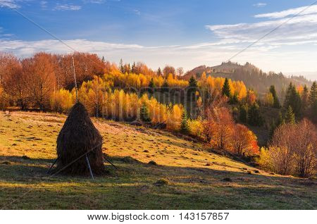 Autumn landscape in sunny weather. Haystack on the meadow in a mountain village. Birch forest with beautiful leaves. Carpathians, Ukraine, Europe