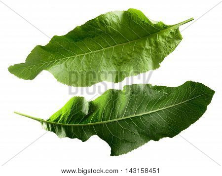 Horseradish Leaves, Clipping Paths