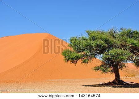 Sossusvlei. Namib-naukluft National Park, Namibia, Africa
