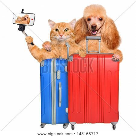 Cat and dog taking a selfie with a smartphone. Cat and dog with a suitcases .Isolated on white.