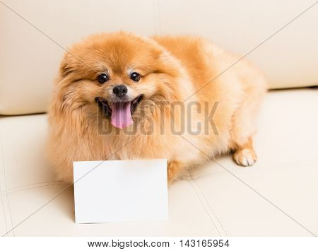 Spitz Dog Sits Next To The Card