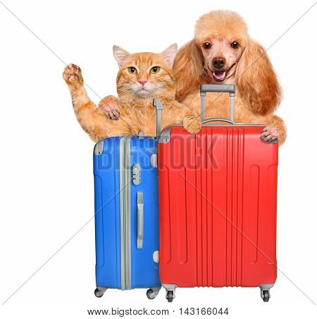 Cat and dog with a suitcases. Isolated on white.