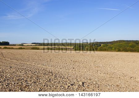 Woodland And Cultivated Soil