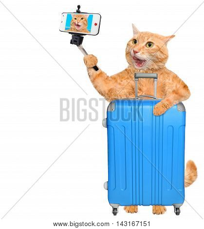 Red cat with a suitcase. Cat taking a selfie with a smartphone. Isolated on white.