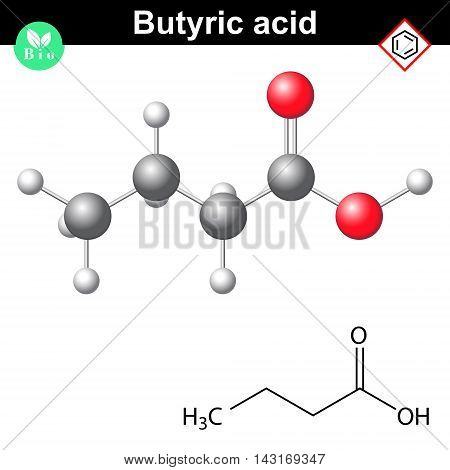 Butyric acid molecule 2d and 3d illustration of molecular structure vector on white background eps 8