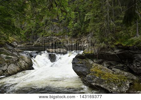 Waterfall with white water with cliff in foreground and fir forest in background picture from the North of Norway.