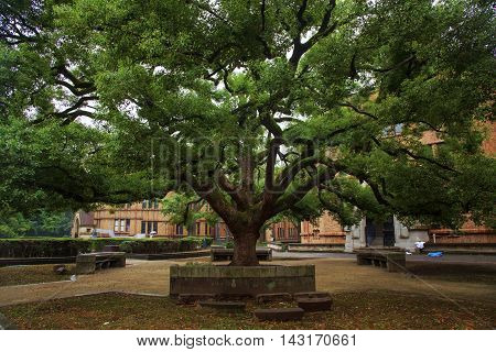 Old Tree With Green Spring Leave