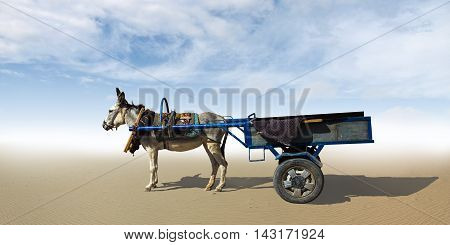 The donkey harnessed to a cart standing in the desert.