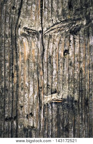 abstract background or texture old gnarled spruce boards