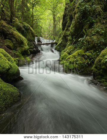 A mossy green creek with lots of ferns