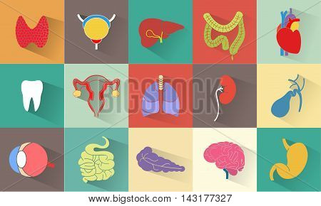 Set of internal human organs such as stomach brains tooth lungs intestine kidneys bone liver bladder heart pancreas eye thyroid. Flat design with long shadow Vector
