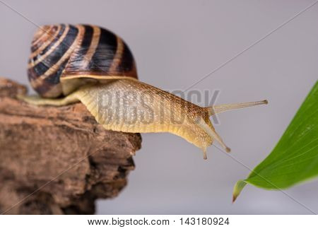Bright cute snail on the tree over grey background