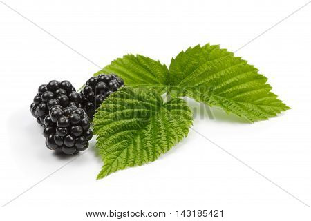 Blackberries and leaves of raspberry on white background