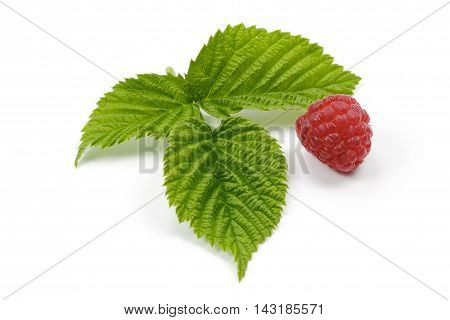 Raspberries with leaves on the white background