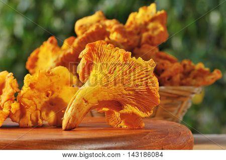 Fresh chanterelle mushrooms on a wooden board