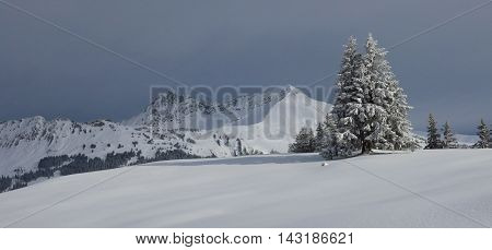 Winter landscape in Gstaad Swiss Alps. Snow covered fir. Mountains Mt Lauenenhorn and Mt Gifer.
