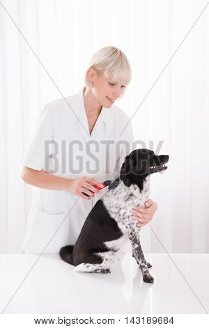 Young Happy Female Vet Grooming Dog's Hair
