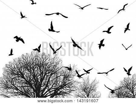 illustration with gulls and tree in late autumn isolated on white background