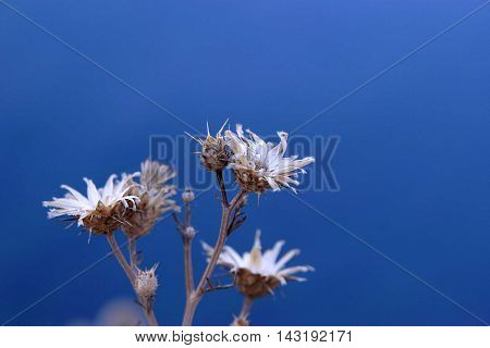 White flower on background the sea summer V