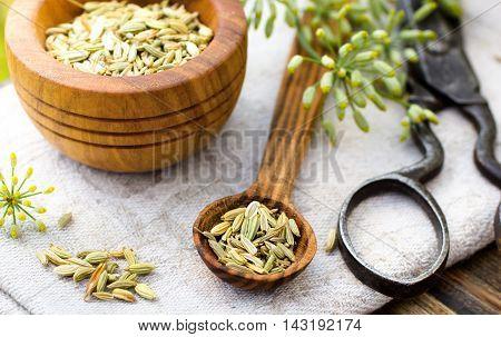 Fennel seeds in wooden spoon outdoor shot