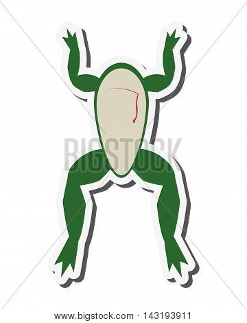 flat design biology class frog surgery icon vector illustration