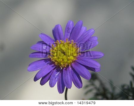 Little Purple and Yellow Flower4