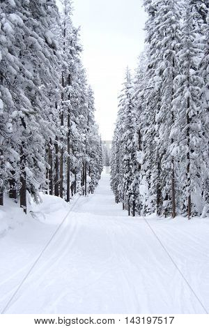 cold wintry day in Montana wilderness ski trail