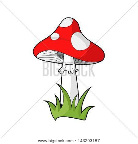 Poisonous red dotted mushroom, known as amanita muscaria or fly agaric or toadstool. Vecor. Isolated on white. Illustration.