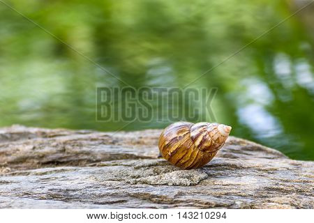 Snail On The Stone In Garden
